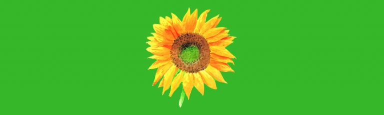 Awesome Sunflower Themed Gifts
