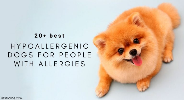 The 20+ Best Hypoallergenic Dogs For People With Allergies